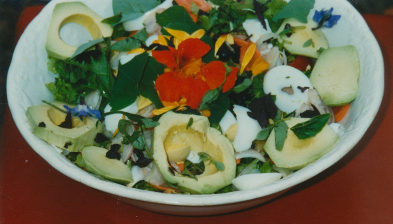 Salad bowls with glowers and herbs