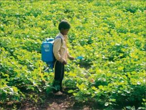 Child spraying pesticides on soya