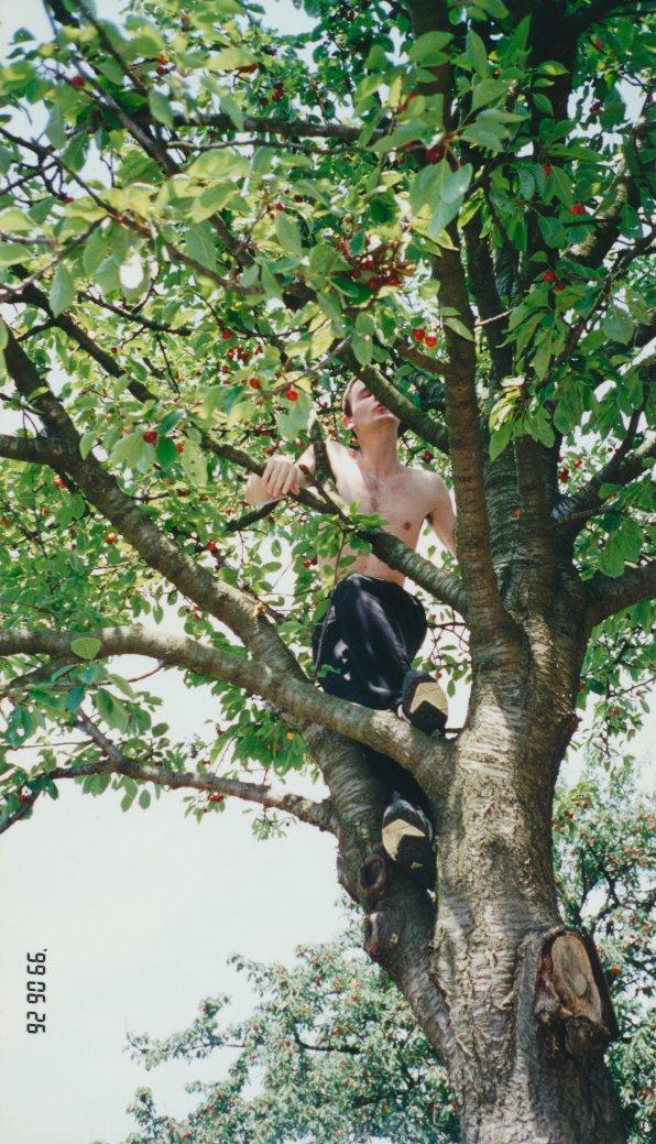 Tristan Titeux climving cherry tree
